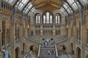 Le Musée d'histoire naturelle de Londres... (Photo fournie par le musée) - image 3.0
