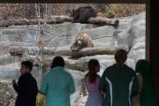 Le zoo John Ball était fermé pour l'hiver,... (Photo Ivanoh Demers, La Presse) - image 3.0