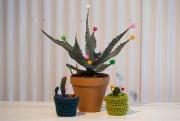 Certains voudront laisser de côté le cactus de... (Photo François Roy, La Presse) - image 2.0