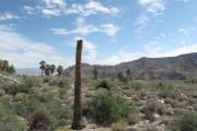 Il y a des endroits où les cactus... (Photo courtoisie, Denise Bourgeois) - image 1.1