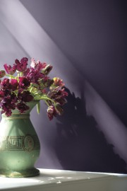 La couleur de l'année, Clématis... (Fournie par Benjamin Moore) - image 14.0