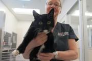 En janvier, un chaton a été lancé par... (Courtoisie) - image 10.0