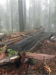 La tempête qui a touché la Californie ces... (Photo AP) - image 1.0