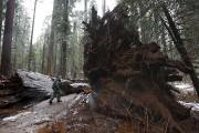 California State Parks Supervising Ranger Tony Tealdi walks... (Associated Press) - image 12.0