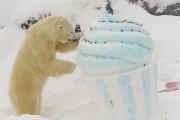 L'ours Yellé... (Le Progrès-Dimanche, Gimmy Desbiens) - image 2.1