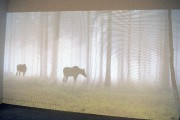 L'exposition permet de découvrir en photos et en... (Le Progrès-Dimanche, Jeannot Lévesque) - image 2.1