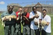Image tirée du film américain Prison dogs, de... - image 9.0