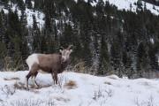 Dans la région du glacier Athabasca à Jasper,... (Photo Yannick Fleury, La Presse) - image 3.0