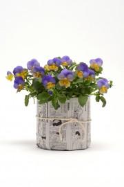 Annuelle vivace bulbe et l gume de l 39 ann e m lissa bradette toit et moi - Pensee fleur vivace ou annuelle ...