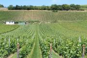 Il est possible de visiter de nombreux vignerons... (Photo David Santerre, La Presse) - image 5.0