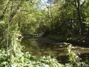 Sentierde la rivière Cap-Rouge... (Denise Gilbert) - image 16.0