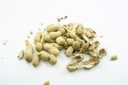 L'arachide est l'ennemie jurée des boîtes à lunch, la rejetée des cours... - image 5.0