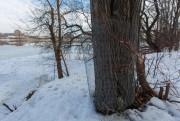 Une quinzaine d'arbres ont été protégés des castors... (PHOTO OLIVIER JEAN, LA PRESSE) - image 1.0