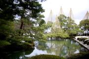 Dans le jardin Kenrokuen, des branches d'arbres sont... (Photo Sarah Mongeau-Birkett, La Presse) - image 2.0