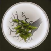 Les racines du niveau zéro... (Michel Dubreuil) - image 2.1