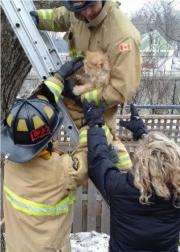 Tommy était bien mal pris.... (Courtoisie, Service des incendies d'Ottawa) - image 2.0