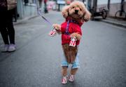 Ce petit chien semble prêt à défiler.... (AFP, Johannes EISELE) - image 2.0