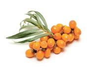 L'argousier remplace le citron et les agrumes dans... (Photothèque Le Soleil) - image 3.1