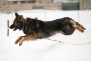 Ace saute au-dessus d'un banc de neige lorsque... (Photo David Boily, La Presse) - image 1.0