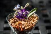 Les insectes sont riches en protéines, moins gras... (Photo Érik Ayala Bribiesca) - image 2.0