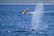Les excursions aux baleines causent un certain dérangement... (La Presse, David Boily) - image 4.0