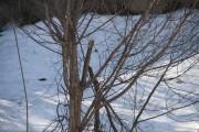 À la fonte des neiges, on trouve souvent... (jardinierparesseux.com) - image 2.0