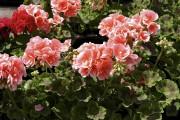 Il est temps de stimuler la croissance des... (jardinierparesseux.com) - image 4.0