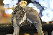 Les oiseaux étaient encore une fois au rendez-vous... (Photo Le Quotidien, Michel Tremblay) - image 2.0