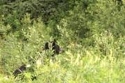 Un ours noir croisé à l'entrée du parc... (Collaboration spéciale Normand Provencher) - image 3.0