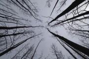 La forêt verdoyante a laissé sa place à... (AFP, Robyn Beck) - image 1.0