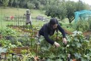 Le travail dans le jardin peut être aussi... (Le Quotidien, Dominique Gobeil) - image 3.0