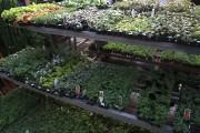 Le rayon des boutures enracinées offre le meilleur... (www.jardinierparesseux.com) - image 2.0