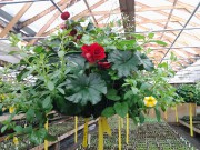 L'horticulture, qui comprend la culture des légumes et... - image 1.1