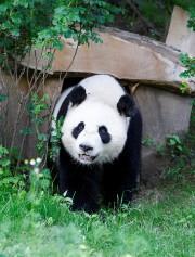 Wu Wen... (REUTERS) - image 2.0