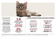 Caroline Fournier vit entourée de minous qu'elle a... (Infographie Le Soleil) - image 2.0
