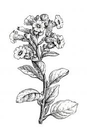 Un sirop de fougère pour traiter l'asthme, de la poudre de rhubarbe comme... - image 8.0