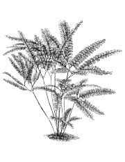 Un sirop de fougère pour traiter l'asthme, de la poudre de rhubarbe comme... - image 9.0