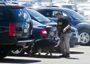 Des chiens renifleurs ont été déployés dansle stationnement... (AP) - image 3.0