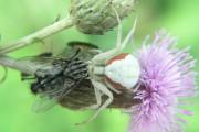 Plusieurs personnes perçoivent les araignées comme des bestioles... (WIKIMEDIA) - image 1.0
