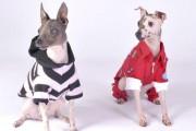 Marilyn Tremblay a adopté deux chiens terrier nu... (Photo courtoisie) - image 2.0