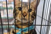 Plusieurs chats sont en adoption, mais la quarantaine... (Alain Dion) - image 1.0