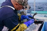 Ils vivent à l'heure des Maritimes,... (collaboration spéciale Nigel Quinn) - image 7.0