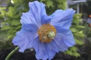 L'une des plantes préférées d'Alexandre Fortin, et l'une... (Photo courtoisie) - image 2.0