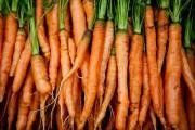Les carottes ont besoin d'un peu plus de... (Photo Marco Campanozzi, Archives La Presse) - image 2.0