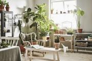 Avant de quitter la maison, éloignez vos plantes... (PHOTO FOURNIE PAR IKEA CANADA) - image 4.0