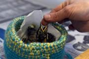 Ces petits merles d'Amérique ont été retrouvés au... (Photo Le Quotidien, Michel Tremblay) - image 3.0