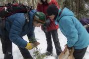 La récolte de sapin se fait en compagnie... (Julie Moffet, Forêt Montmorency) - image 6.0