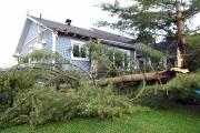 Un autre arbre a endommagé le mât électrique... (Photo Le Quotidien, Rocket Lavoie) - image 2.1