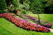 Cascades de fleurs... (PHOTO BERNARD BRAULT, LA PRESSE) - image 3.1