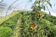 Les légumes récoltés par l'équipe de l'HopEra sont... (Le Progrès, Rocket Lavoie) - image 1.0